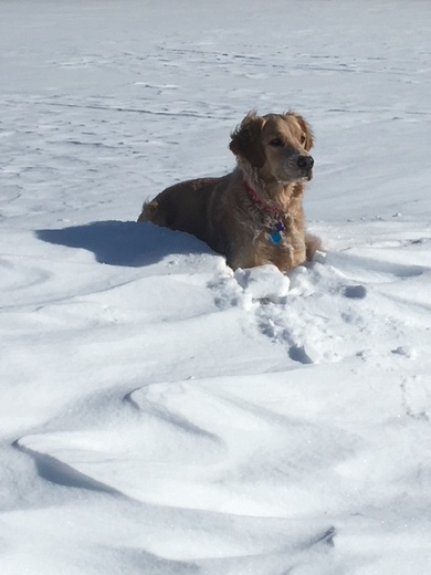 Fetch in the snow, a new winter Olympic game