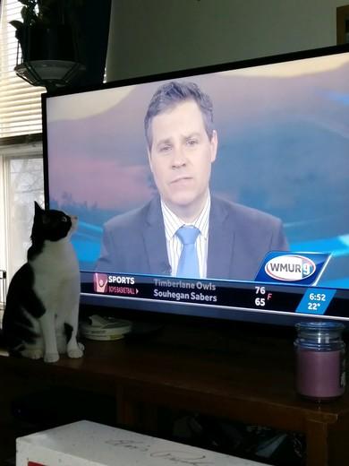 1 year old kitten watching WMURP