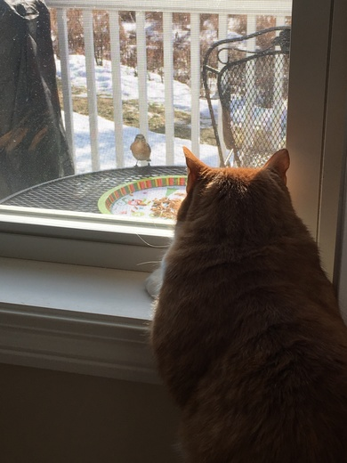 Vinnie is keeping an eye on the bluebirds!