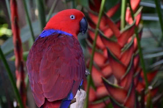 More parrot
