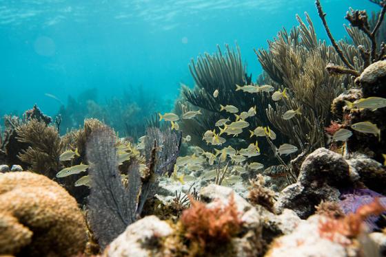 Winter Swim on the Reef