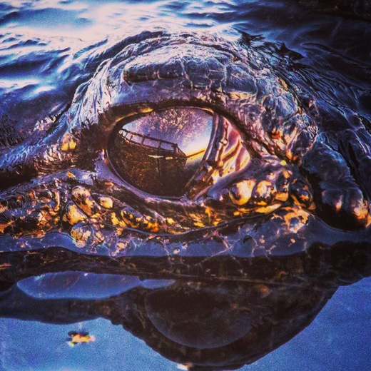 Sunset Gators Eyes