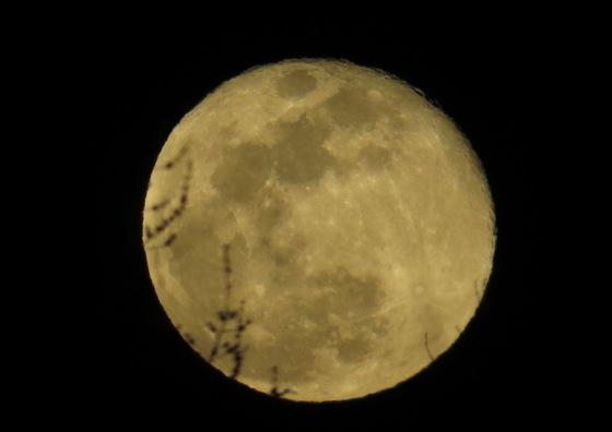 View Of A Near Full Moon Seen Through A Tree Limb