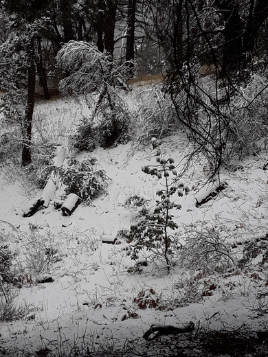 Snow at Los Padres National Forest