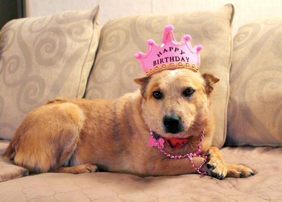 Ashlee turns 9 years old!