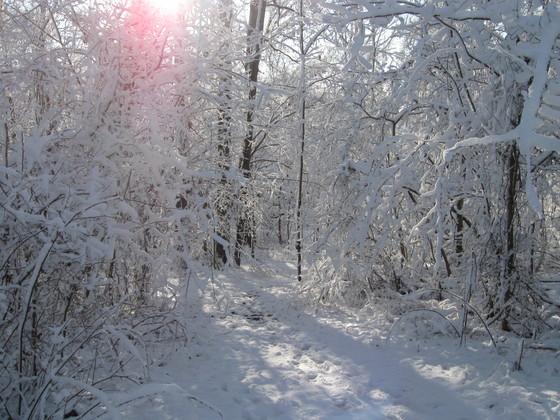 Woodland Winterland