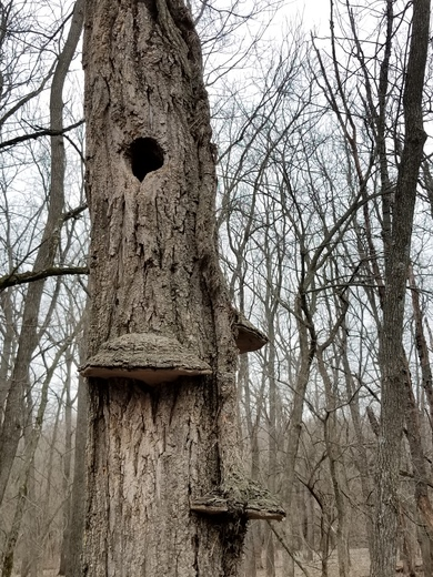 Found some leaves just starting to bud and a wood peckers home on my nature walk.