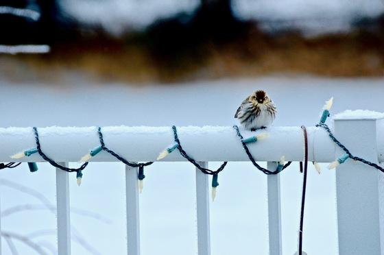 Bushy Bird