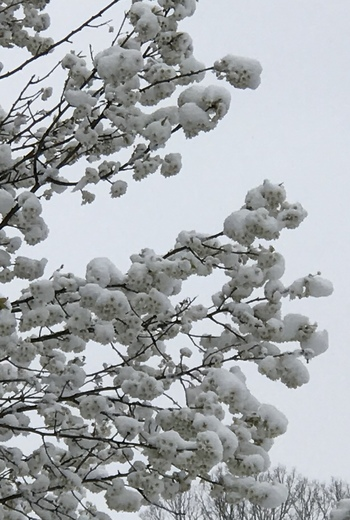 Awesome Snowball Heather Tree
