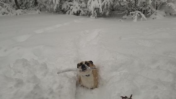 A Dog, A Stick & A Blizzard!!!