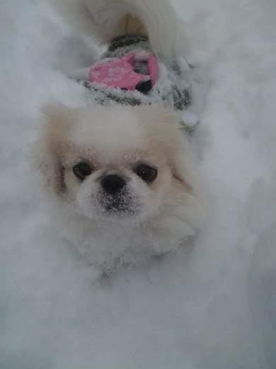 Snowie luvs the Snow