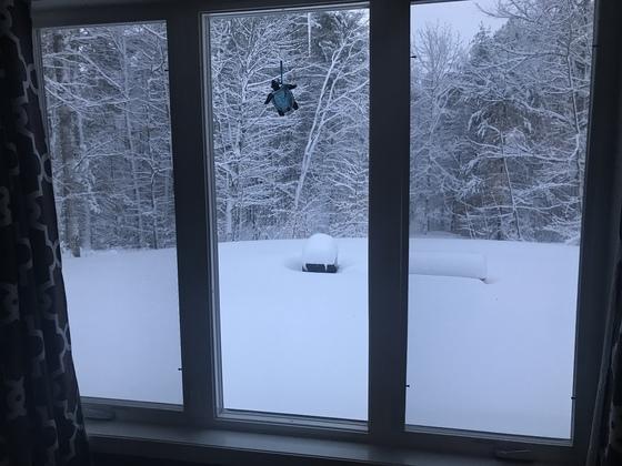 Winter Storm Skylar
