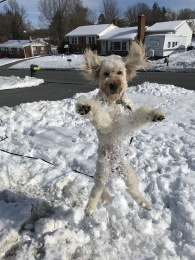 Tucker jumping in the snow!
