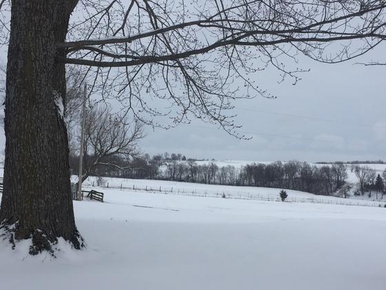 Snow pics