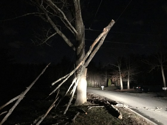 Wind damage in Londonderry