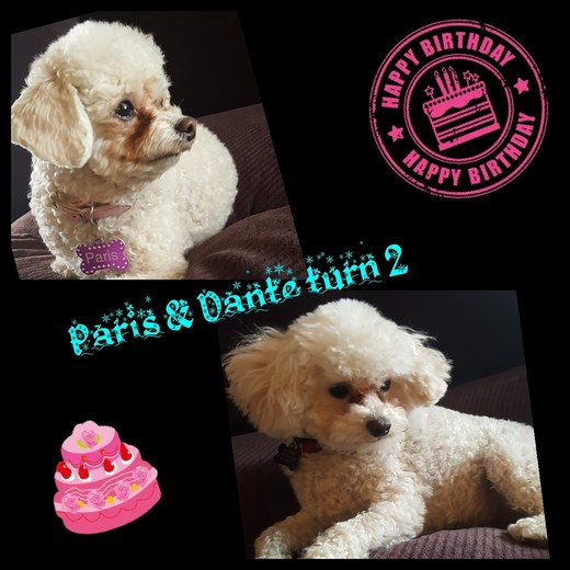 Paris & Dante celebrate their 2nd Birthday on April 11th