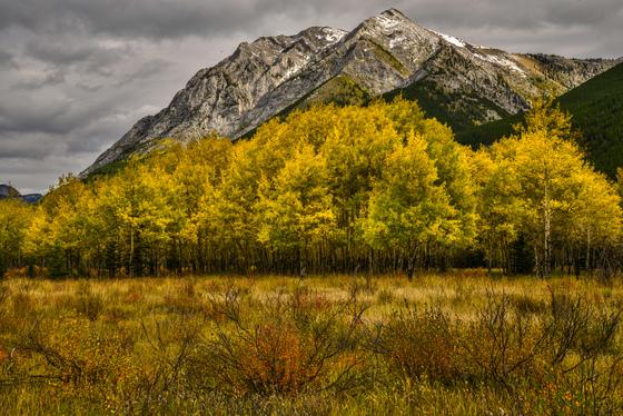 Alberta autumn