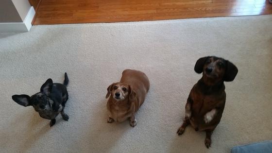 Chloe, Izzybella, Buzzman