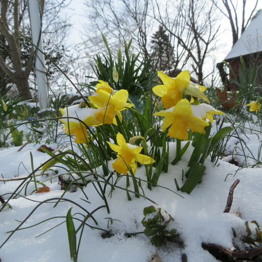 Spring Has Sprung???