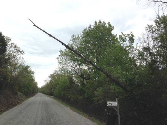 Tree Leaning over the road