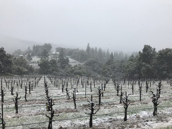 Snow at 2500' Oakstone Winery in Fair Play @ 1:00pm.