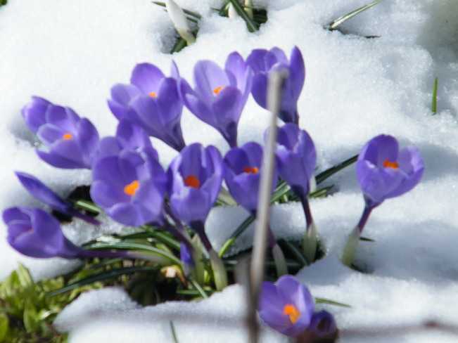 Photos the weather network spring flowers 1885 parkwood cir peterborough on k9j 8c7 canada mightylinksfo