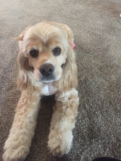 This is Ambersky and her Birthday is May 6th she turns 9 can you wish her Happy Birthday