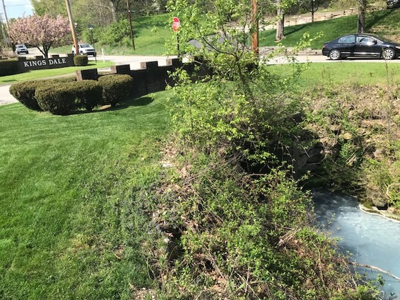 Major sewage pollution in local stream in Wilkins