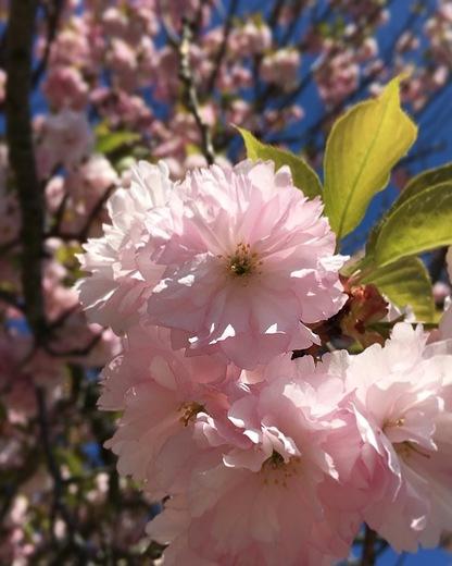 Spring time in North Billerica