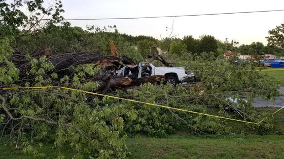 Large tree down on Redland Road