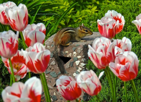 Stop and smell the tulips!