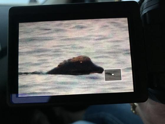 Whale?