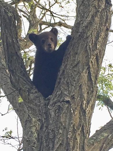A beary nice morning