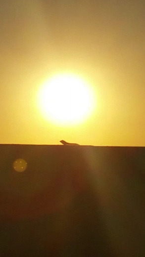 Got some killer shots of a lizard on a wall with the sUn in the background