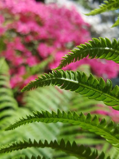Ferns loving all the rain..