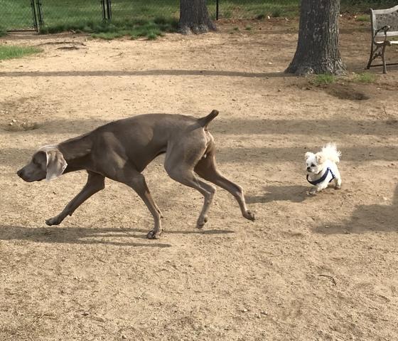 Silly doggies