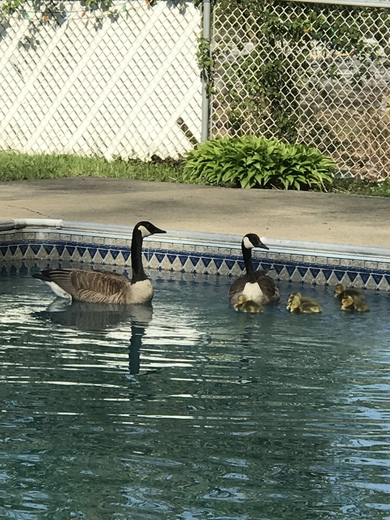 Visitors to our just opened pool.