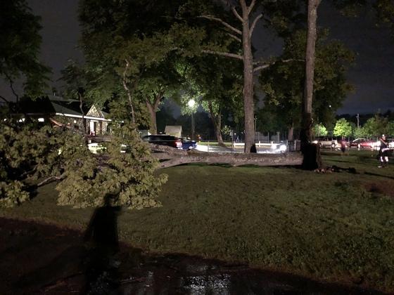 Tree Down- Hudson MA- Riverside Park