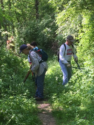 GO Local blazes a trail in Sycamore Park