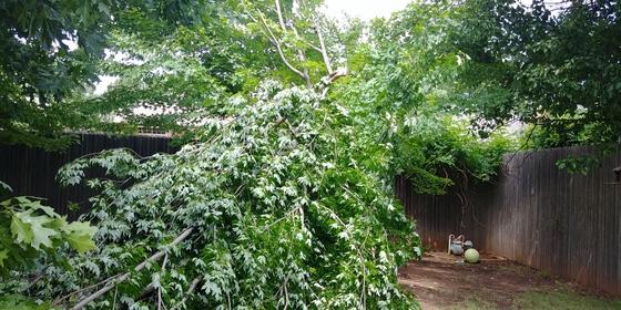 Tree fallen due to storm