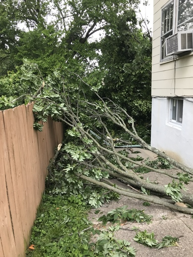 Tree missing the house landing in the driveway  covering  entire backyard  in St. Bernard