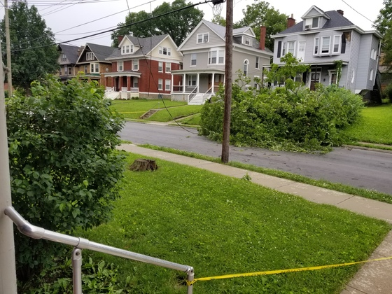 Tree down from storm on Burnet Ave in Mt Auburn.
