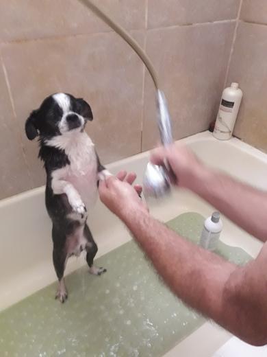 Maxy getting a bath,