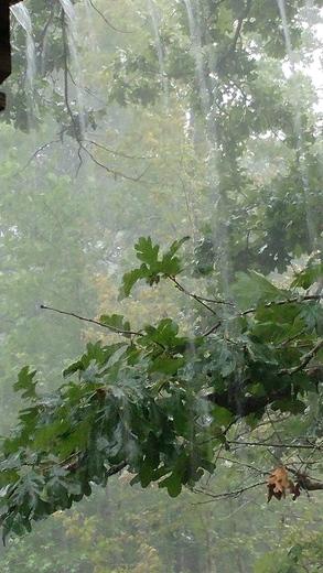 Rain is a good thing....