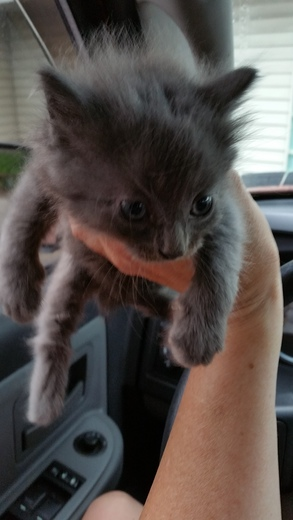 1 of 4 kittens that was dumped on Route 51 in Pleasant Hills this morning.