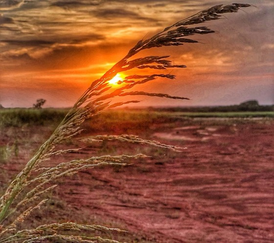 Just Enjoying the beautiful Oklahoma red mud and weeds at sunset it packs a beautiful punch