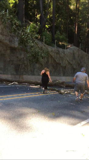 Tree falls on Hecker Pass road blocking both sides of traffic