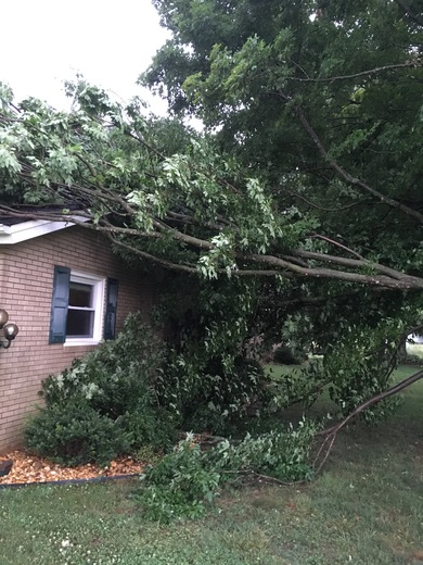 Tree limb on house from storm this evening.