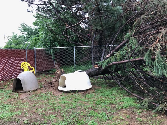 These are pictures of the damage done at the Animal Care Society on Westport Road