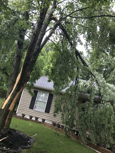 Tree struck by lightning in monroe ohio , tree fall on house . splitting by the minute.